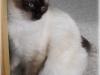SC (N) RGJ Cat's Asalea