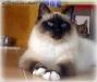 RGJ Cat's Asalea