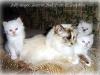 J-kittens La griffe aigue *RU