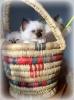K-kittens La griffe aigue *RU