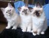 V-kittens, 14.03.2010